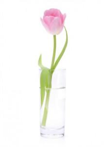 Janfleur Arnhem tulp